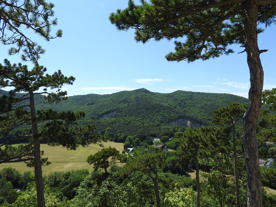 Naturschutzgebiet Föhrenberge - Wandern in der Natur